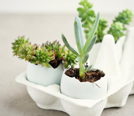 Table decoration – succulents and craspedia