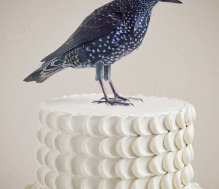 Feathercake with bird